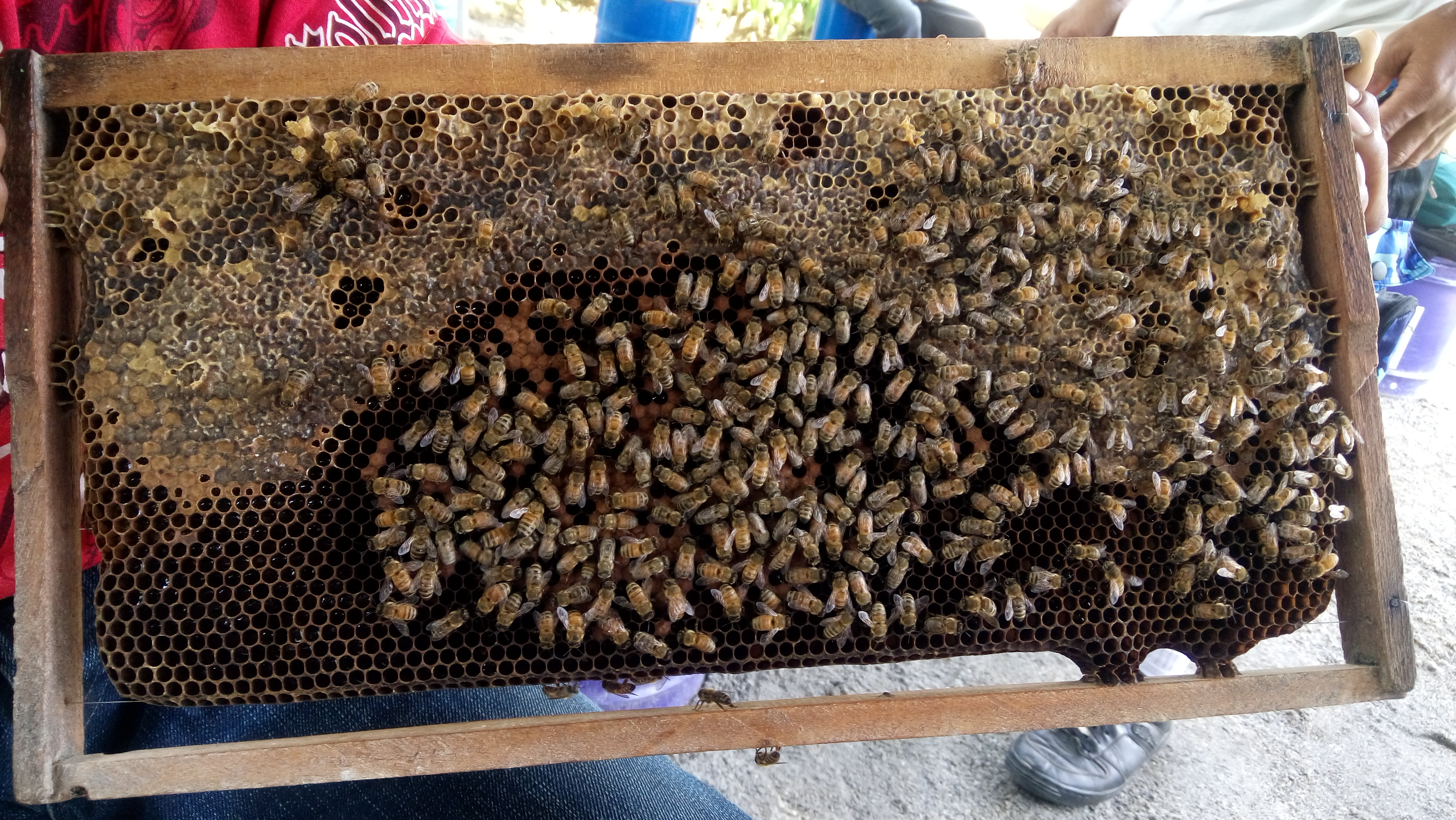 Honeybee for Mangyan Communities