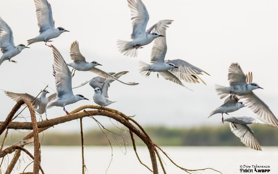 Annual Asian Waterbird Census